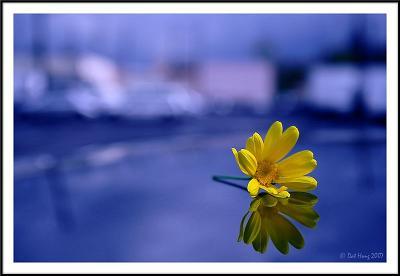 flower-blue-sky